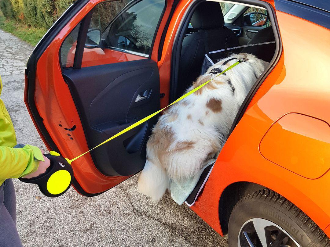 Opel Corsa-e - Abenteuer mit Hund